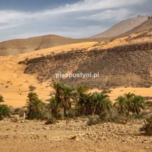 Pustynny region Adrar 4 - Blog podróżniczy - PIES PUSTYNI