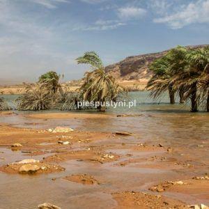 Wādī Sakallīl 10 - Blog podróżniczy - PIES PUSTYNI