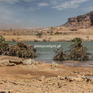 Wādī Sakallīl 11 - Blog podróżniczy - PIES PUSTYNI