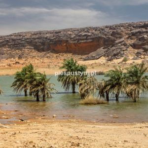Wādī Sakallīl 12 - Blog podróżniczy - PIES PUSTYNI