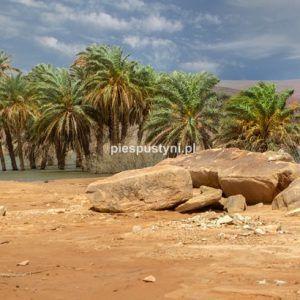 Wādī Sakallīl 15 - Blog podróżniczy - PIES PUSTYNI