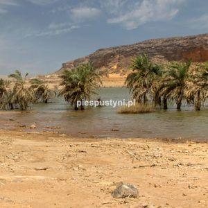 Wādī Sakallīl 2 - Blog podróżniczy - PIES PUSTYNI