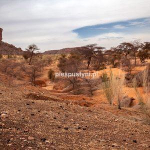 Al-Asaba 2 - Blog podróżniczy - PIES PUSTYNI
