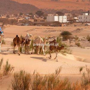 Moudjéria 4 - Blog podróżniczy - PIES PUSTYNI